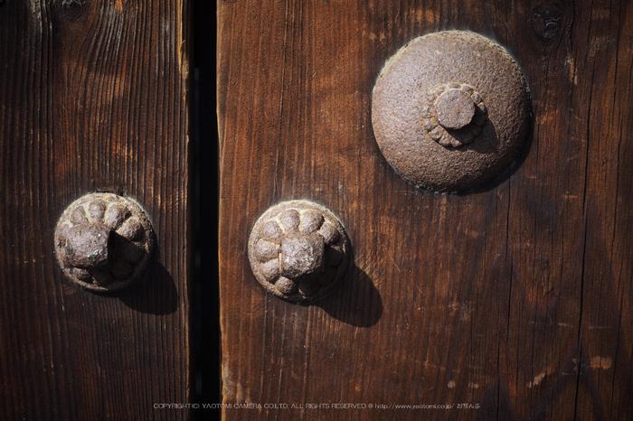 北野天満宮,梅(OMD_EM10,09-37-28,37mm,F7.1,iso200)2014yaotomi_.jpg