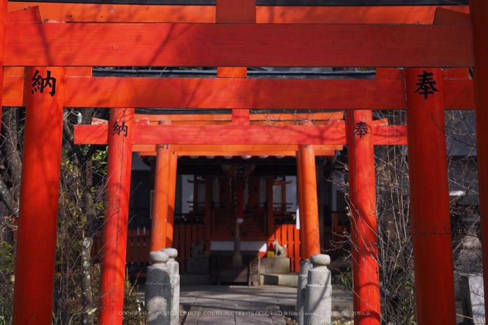 北野天満宮,梅(OMD_EM10,10-07-40,40mm,F5.6,iso200)2014yaotomi_.jpg