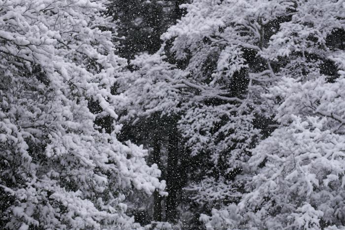 鞍馬寺,雪景(NOCTICRON,08-46-42,43mm,F2.8)_2014yaotomi_.jpg