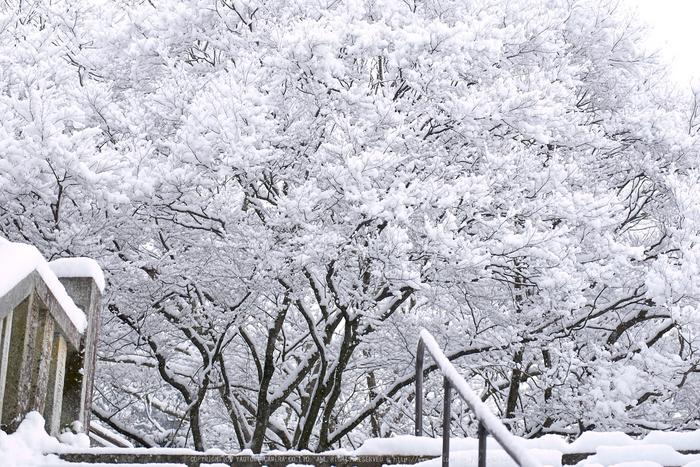 鞍馬寺,雪景(NOCTICRON,08-58-32,43mm,F2.8)_2014yaotomi_.jpg