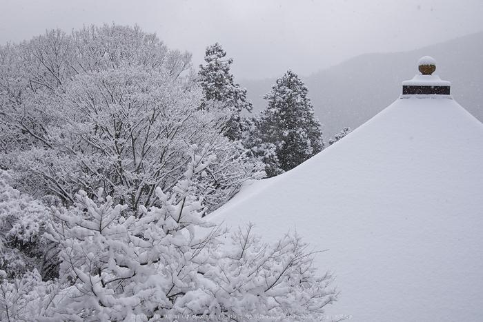 鞍馬寺,雪景(NOCTICRON,09-03-02,20mm,F5.6)_2014yaotomi_.jpg