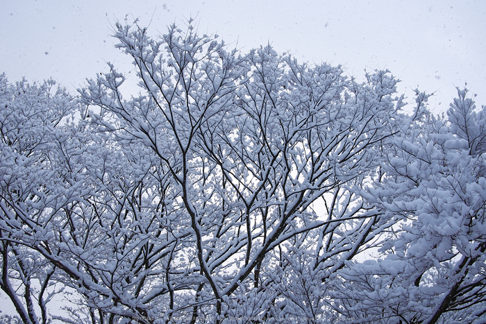 鞍馬寺,雪景(NOCTICRON,09-06-26Cap,20mm,F5)_2014yaotomi_.jpg