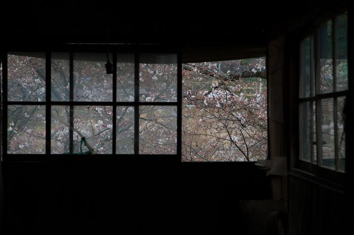 下北山村,桜,2014開花(PK3_8027_F5,0,70mm)_2014yaotomi_.jpg