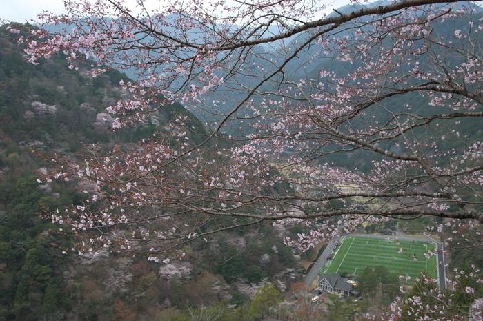 下北山村,桜,2014開花(PK3_8124_F8,0,26mm)_2014yaotomi_.jpg