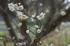 大和七福八宝めぐり,談山神社_PK3_6465,F2,8(SIGMA30mm1,4_FULL)_2014yaotomi_.jpg