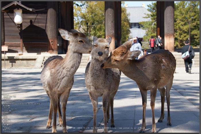 奈良,梅,SIGMA18_200,(IMG_9820,39mm,F4.5)2014yaotomi_Top.jpg