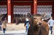 奈良,梅,SIGMA18_200,(IMG_9831,89mm,F6.3)2014yaotomi_.jpg