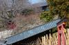 奈良,梅,SIGMA18_200,(IMG_9867,75mm,F7.1,FULL)2014yaotomi_.jpg