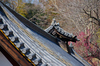 奈良,梅,SIGMA18_200,(IMG_9870,170mm,F6.3,FULL)2014yaotomi_.jpg