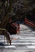 奈良,梅,SIGMA18_200,(IMG_9925,106mm,F9,FULL)2014yaotomi_.jpg