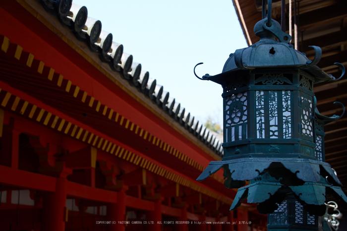 奈良,梅,SIGMA18_200,(IMG_9950,54mm,F6.3)2014yaotomi_.jpg