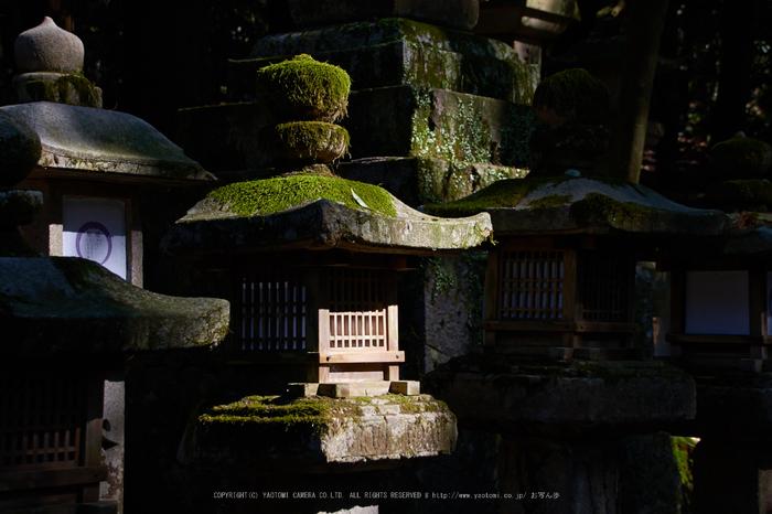 奈良,梅,SIGMA18_200,(IMG_9961,54mm,F6.3)2014yaotomi_.jpg