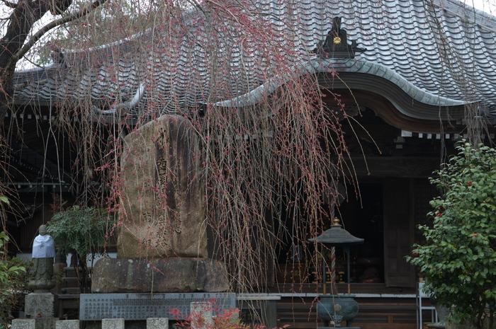 奈良桜,2014近況,PK3_7858(F8,0)_2014yaotomi_.jpg