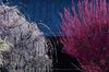 結城神社,梅,SIGMA18_200,(IMG_0538,89mm,F9,FULL)2014yaotomi_.jpg