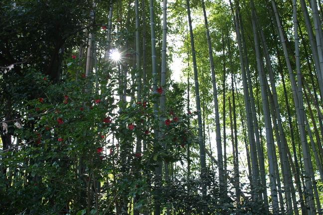 観心寺,梅(PK3_7350_F5,6_30mm)2014yaotomi_.jpg