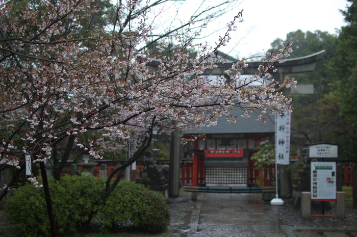 車折神社,桜_2014yaotomi_PK3_7717(F1,6_30mm).jpg