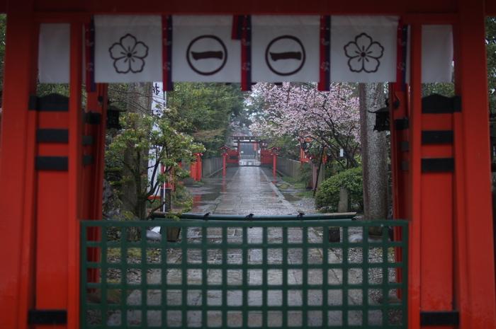 車折神社,桜_2014yaotomi_PK3_7727(F1,4_30mm).jpg