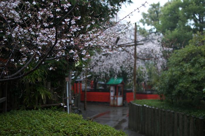 車折神社,桜_2014yaotomi_PK3_7739(F1,6_30mm).jpg