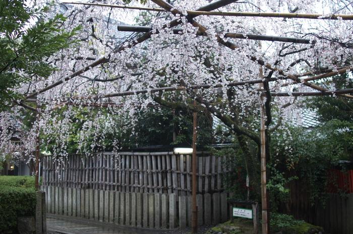 車折神社,桜_2014yaotomi_PK3_7745(F1,6_30mm).jpg