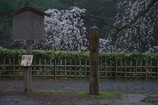 近衞邸跡,桜_2014yaotomi_PK3_7531(F4,5).jpg
