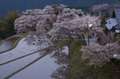 三多気・桜(DSCF0371,F9,67.1mm,FULL)2014yaotomi_.jpg
