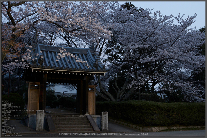 九品寺,桜(PK3_8130,F8,37mm)2014yaotomi_Top.jpg