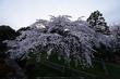 九品寺,桜(PK3_8146,F10,--mm,FULL)2014yaotomi_.jpg