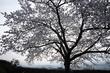 九品寺,桜(PK3_8191,F9,17mm,FULL)2014yaotomi_.jpg