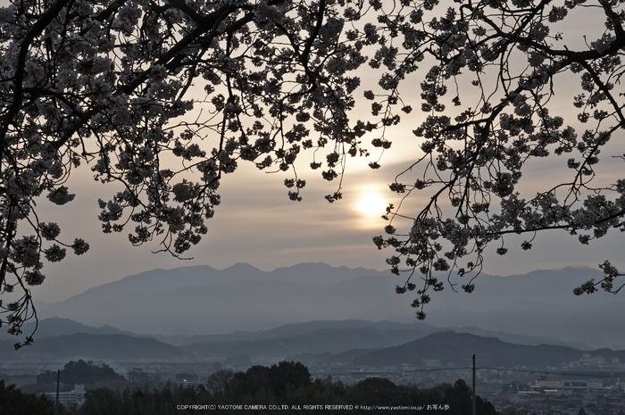九品寺,桜(PK3_8209,F16,58mm)2014yaotomi_.jpg