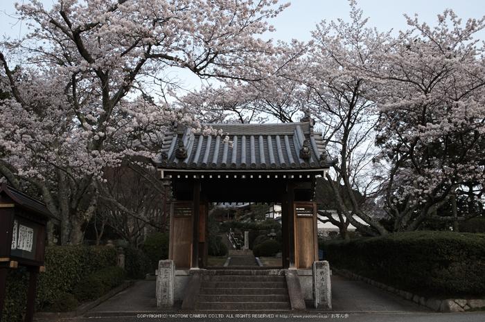 九品寺,桜(PK3_8225,F9,26mm)2014yaotomi_.jpg