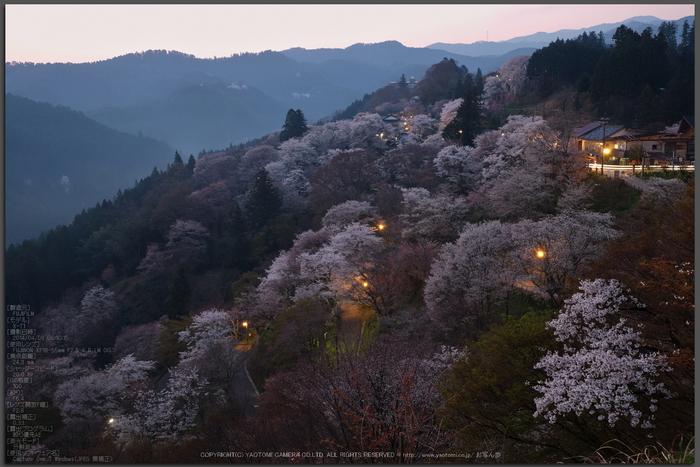 吉野山,下千本,桜(DSCF0007,F6.4,24.3mm)2014yaotomi_Top.jpg