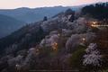 吉野山,下千本,桜(DSCF0007,F6.4,24.3mm,FULL)2014yaotomi_.jpg