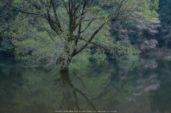 室生湖・新緑,桜(DSCF5063,F8,32.9mm)2014yaotomi_.jpg
