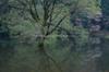 室生湖・新緑,桜(DSCF5063,F8,32.9mm,FULL)2014yaotomi_.jpg