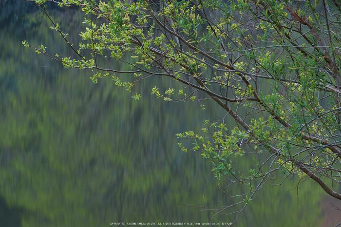 室生湖・新緑,桜(DSCF5071,F13,110.3mm)2014yaotomi_.jpg