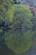 室生湖・新緑,桜(DSCF5077,F9,60.7,FULL)2014yaotomi_.jpg