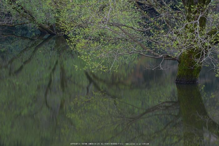室生湖・新緑,桜(DSCF5082,F13,90.4mm)2014yaotomi_.jpg