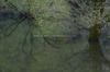 室生湖・新緑,桜(DSCF5082,F13,90.4mm,FULL)2014yaotomi_.jpg