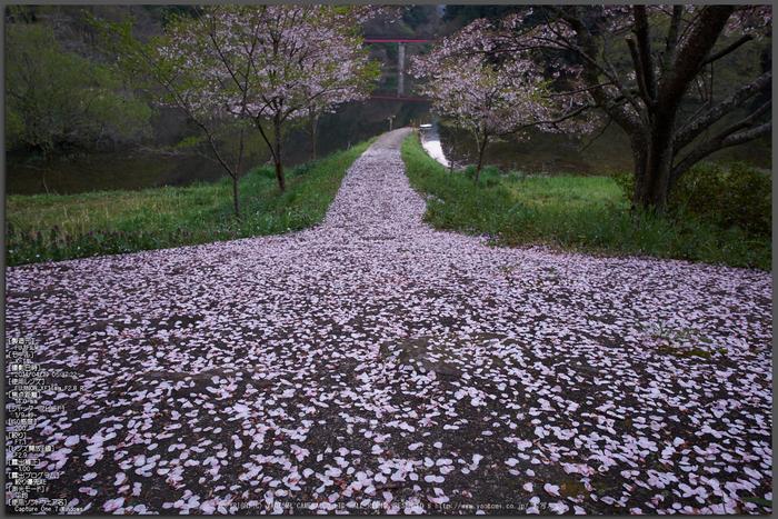 室生湖・新緑,桜(DSCF5115,F7.1,14)2014yaotomi_Top.jpg
