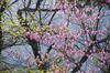 室生湖・新緑,桜(DSCF5158,F6.4,141.3mm,FULL)2014yaotomi_.jpg