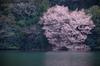室生湖・新緑,桜(DSCF5164,F6.4,172.4,FULL)2014yaotomi_.jpg