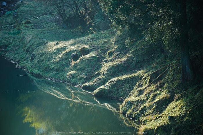 室生湖・新緑,桜(DSCF5196,F4,99.8)2014yaotomi_.jpg