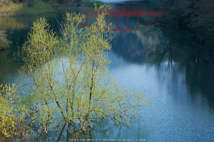 室生湖・新緑,桜(DSCF5210,F8,55mm)2014yaotomi_.jpg