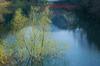 室生湖・新緑,桜(DSCF5210,F8,55mm,FULL)2014yaotomi_.jpg