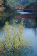 室生湖・新緑,桜(DSCF5216,F8,55mm,FULL)2014yaotomi_.jpg