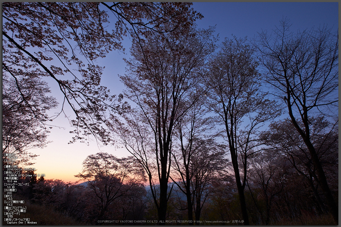 屏風岩公苑・桜(DSCF5458,F9,10mm)2014yaotomi_Top.jpg