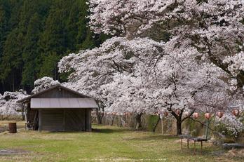 岩端・桜(DSCF0294,F3.2,56mm)2014yaotomi_.jpg
