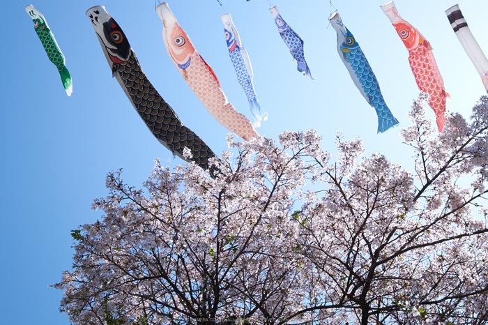 岩端・桜(DSCF5303,F8,22.9mm)2014yaotomi_.jpg