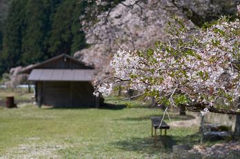岩端・桜(DSCF5325,F2.5,56mm)2014yaotomi_.jpg