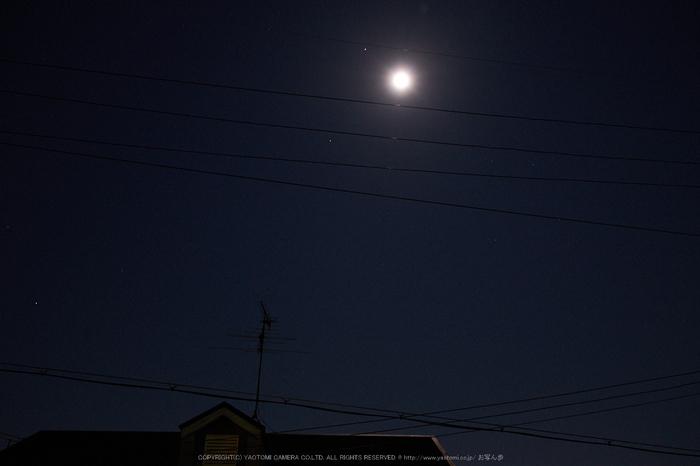 郡山城跡,桜(DSCF0345,F4.5,19.6mm)2014yaotomi_.jpg